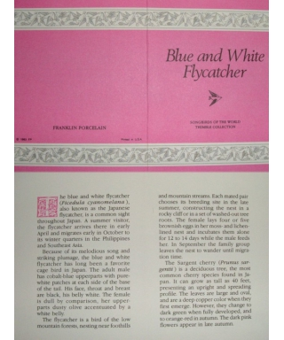 Blue and White Flycatcher - certificate