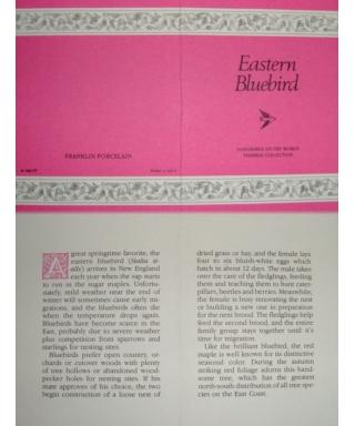 Eastern Bluebird - certificate