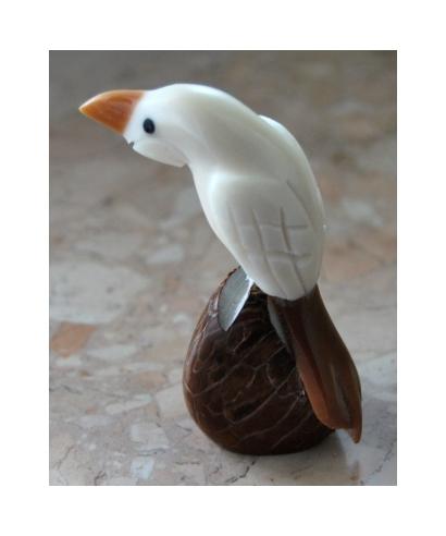 Tagua parrot