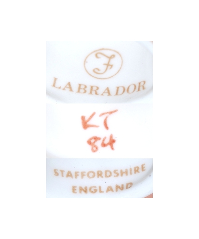 Francesca (biszkoptowy Labrador, K Taylor), Staffordshire